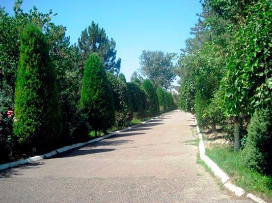 Санаторий ЦПУЗОС «Янгиюль». Узбекистан_13