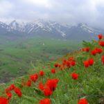 """aksu jabagly3 150x150 - Conservation Park """"Aksu-Zhabagly"""
