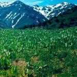 """aksu jabagly4 150x150 - Conservation Park """"Aksu-Zhabagly"""
