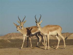 badhyz2 300x225 - State Reserve Badkhyz