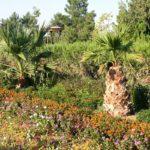 hakim at termezi20 150x150 - Memorial of Hakim at-Termezi