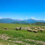 kahetia 2 6 150x150 - The history of the development of Georgian Kakheti