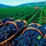 kahetia vino12 150x150 - Travel Kakheti: national traditions