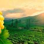 kahetia vino2 150x150 - Travel Kakheti: national traditions
