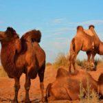 safari4 150x150 - YURTOV CAMP SAFARI