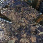 tanbaly2 150x150 - Petroglyphs Tanbaly