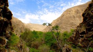 парки и заповедники туркмении