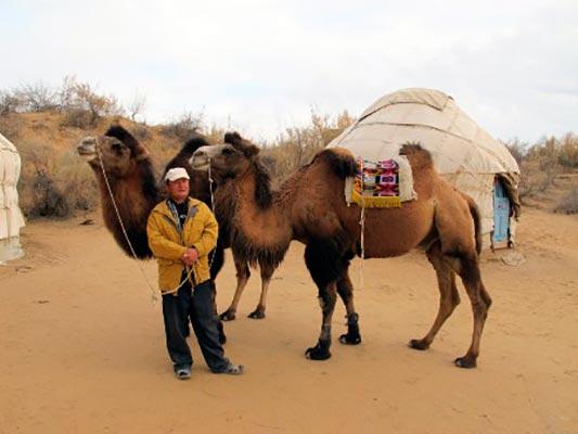 safari1 - Юртовый лагерь Сафари
