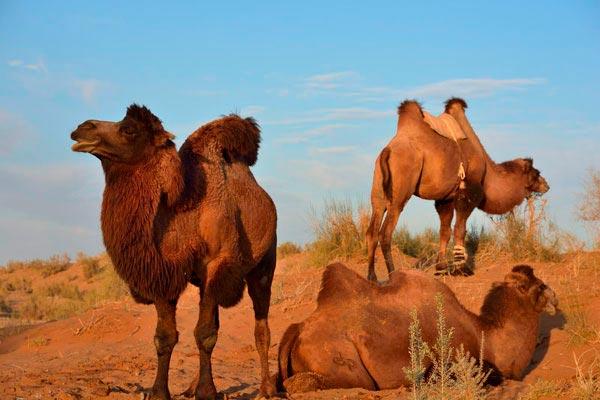 safari4 - Юртовый лагерь Сафари