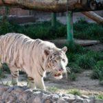 almaty zoo1 150x150 - Алматинский зоопарк