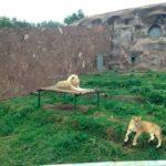 almaty zoo10 150x150 - Алматинский зоопарк