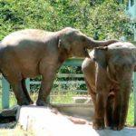 almaty zoo12 150x150 - Алматинский зоопарк