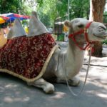 almaty zoo3 150x150 - Алматинский зоопарк