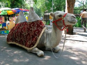 almaty zoo3 300x225 - Алматинский зоопарк