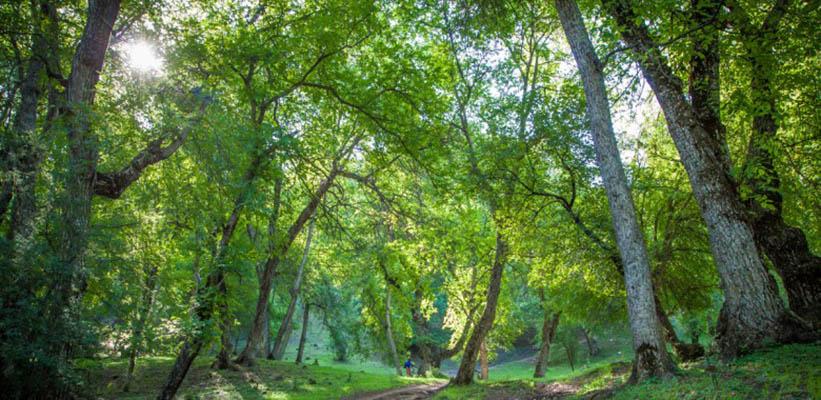 arslanbob5 - Национальный природный заповедник Арсланбоб