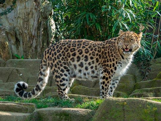erevan zoo5 - Зоопарк