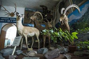 Зоологический музей в Киргизии. Туры в Киргизию